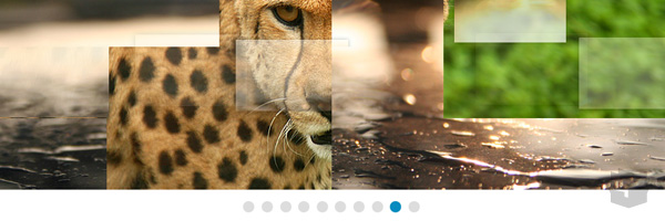 Jq Tiles Photo Image Gallery And Slider Best Jquery Plugin 2013